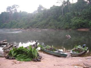 Cocoicultura